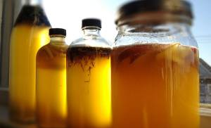Popularity of fermented foods on the rise