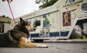 Jack, a shepherd/husky mix, sits outside the American Humane Association animal rescue vehicle at Oklahoma State University-Oklahoma City. [Photo by Chris Landsberger, The Oklahoman]