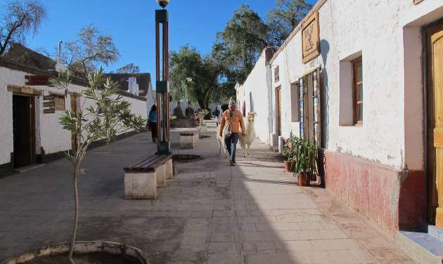 This August 2012 photo shows a man walking with his llamas down a street in San Pedro de Atacama, Chile. The town of about 3,000 residents is the gateway to activities in the Atacama Desert. (AP Photo/Karen Schwartz)