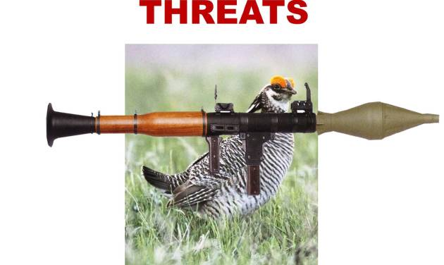 Democrats on the House Armed Services have gotten creative in mocking the effort to portray a sage grouse as a threat to military training and expansion.   Photo: House Armed Services Committee