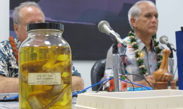A brown tree snake preserved in liquid sits on the table at a Senate Energy and Environment Committee hearing in Honolulu on Friday, Jan. 11, 2013 presided over by Committee Chairman Sen. Mike Gabbard, right. An Agriculture Department official told the committee pests hitchhiking in 40 imported commodities like lettuce and cut flowers account for 90 percent to 95 percent of the pests and potential invasive species entering Hawaii. (AP Photo/Audrey McAvoy)