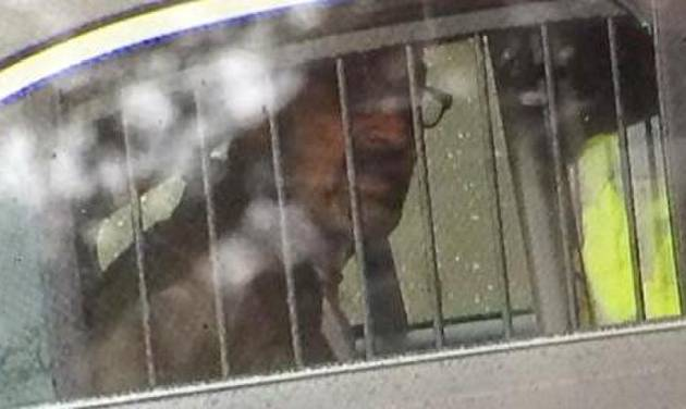 This photo provided by 41ActionNews, shows Frazier Glenn Cross. Cross is accused of killing three people outside of Jewish sites near Kansas City, Sunday April 13, 2014. (AP Photo/41ActionNews)