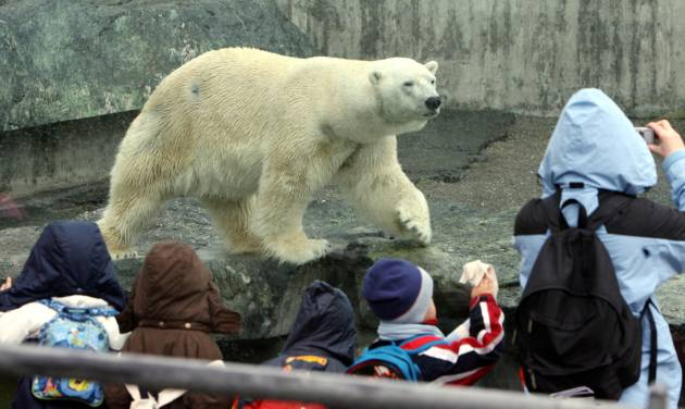 FILE - In this Feb. 19, 2008 file picture , polar bear Anton walks in the  enclosure in the Stuttgart, zoo, Germany. The zoo says one of its polar bears has died after apparently swallowing a jacket or bag dropped into his enclosure by a visitor. The Wilhelma zoo in Stuttgart said Tuesday Feb. 11, 2014 that zookeepers realized something was wrong with 25-year-old Anton when he started vomiting pieces of fabric. The bear died early Monday of severe intestinal injuries. (AP Photo/dpa, Bernd Weißbrod,file)