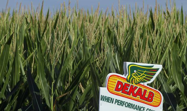 FILE - In this Dunday, July 22, 2012 file photo, a DEKALB corn logo stands along side rows of corn in Ashland, Ill.  DEKALB is one of Monsanto's leading North American brands. Monsanto reports quarterly earnings on Wednesday, April 2, 2014.  (AP Photo/Seth Perlman, File)