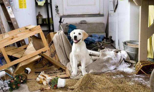 "Marley takes a breather after demolishing the Grogans' garage in ""Marley & Me.""  20th Century Fox Photo"