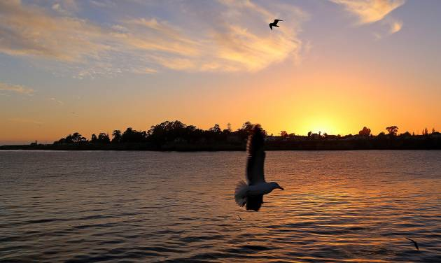In this photo taken Feb. 22, 2014, seagulls fly at sunset near the Santa Cruz Municipal Wharf in Santa Cruz, Calif. The wharf is one of several attractions that can be enjoyed for free in this seaside city. (AP Photo/Michelle Locke)