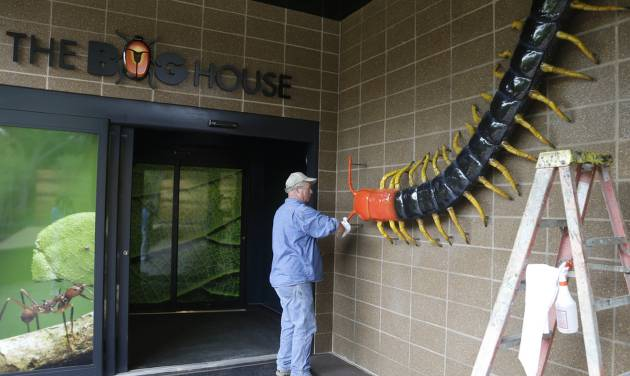 Exhibitry artist Mark Van Wickler polishes his centipede sculpture at the Houston Zoo's new bug house Friday, May 23, 2014, in Houston. The Bug House, opening this weekend, has 30 species of native and exotic insects on display. (AP Photo/Pat Sullivan)