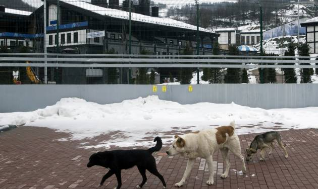 Stray dogs sit outside the Rosa Khutor Extreme Park course, a venue for the snowboarding and freestyle competitions of the 2014 Winter Olympics, in Sochi, Russia, Monday, Feb. 3, 2014.  A pest control company which has been killing stray dogs in Sochi for years told The Associated Press on Monday that it has a contract to exterminate more of the animals throughout the Olympics. (AP Photo/Pavel Golovkin)