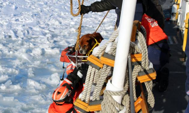 "In this Monday, March 3, 2014 photo provided by the U.S. Coast Guard, crew members assigned to Coast Guard Cutter Bristol Bay hoist aboard the ship a dog they found stranded on the ice of Lake St. Clair, Mich. The dog, who the crew later named ""Lucky,"" was taken inside the ship, where it was provided food and care before before taking it to an animal shelter. (AP Photo/U.S. Coast Guard)"