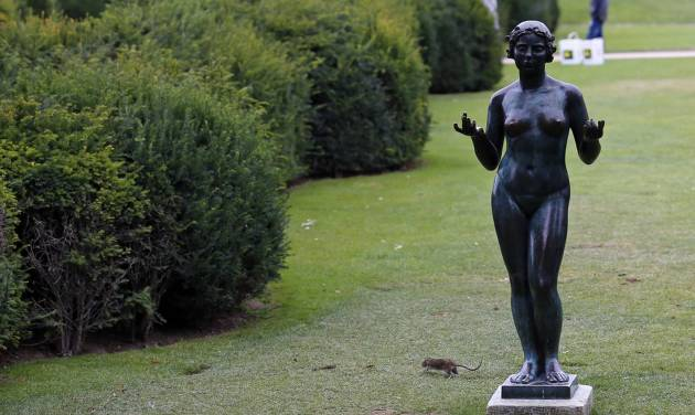 A rat runs next to a Maillol Statue in The Tuileries gardens of the Louvre Muesum in Paris, France, Tuesday, July 29, 2014. Rats have been on the rampage on the grass in broad daylight, defying death threats from sanitation workers. (AP Photo/Francois Mori)