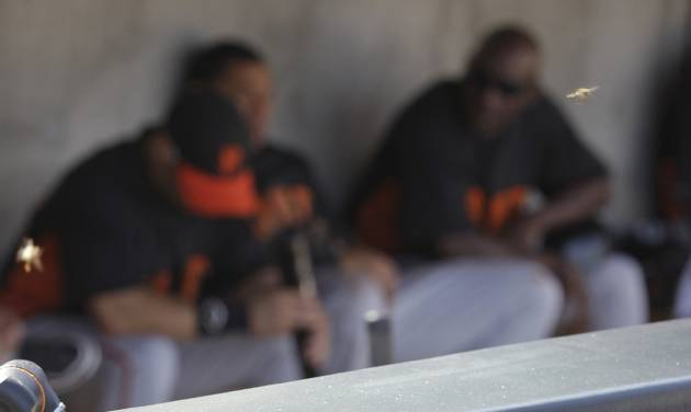 San Francisco Giants players sit in the dugout as a swarm of bees rest on the fence during the second inning of a spring training baseball game against the Arizona Diamondbacks, Sunday, March 4, 2012, in Scottsdale, Ariz. The game was delayed for 41 minutes because of a swarm of bees. (AP Photo/Darron Cummings)