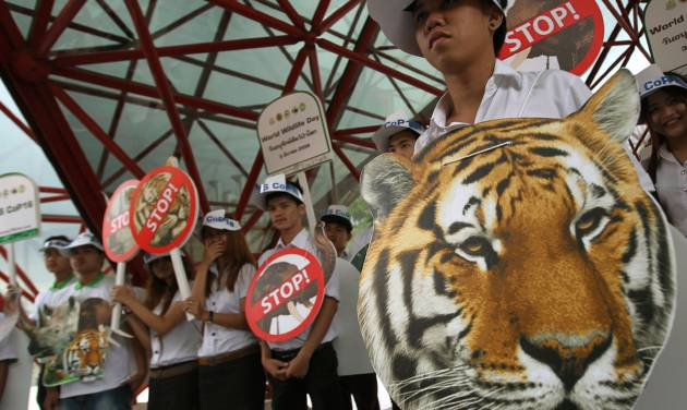 "Thai activists hold posters urging people to stop the trading of tigers during the Convention on International Trade in Endangered Species, or CITES,  in Bangkok Sunday, March 3, 2013. How to slow the slaughter and curb the trade in ""blood ivory"" will be among the most critical issues up for debate at the 177-nation Convention on International Trade in Endangered Species, or CITES, that gets under way Sunday in Bangkok. And the meeting's host, Thailand, will be under particular pressure to take action. (AP Photo/Sakchai Lalit)"