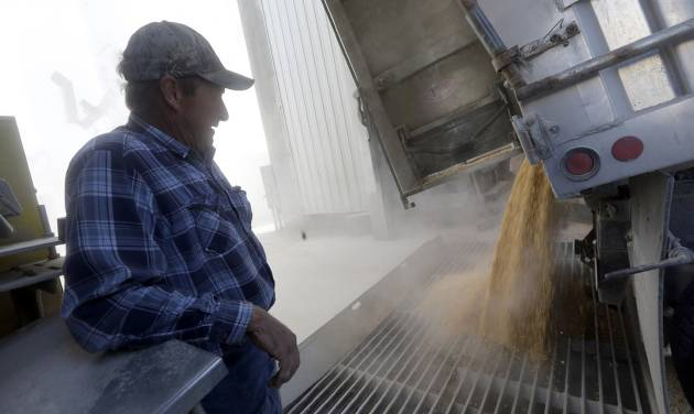 This photo taken Oct. 16, 2013 shows Larry Hasheider watching as a load of his corn is delivered to a grain elevator in Okawville, Ill. Hasheider grows soybeans, wheat and alfalfa on the farm, nestled in the heart of Illinois corn country where he also has 130 dairy cows, 500 beef cattle and 30,000 hogs and even gives tours, something he says he never would have done 20 years ago. Add one more item to the list of chores that Larry Hasheider has to do on his 1,700-acre farm: defending his business to the American public. There's a lot of conversation about traditional agriculture recently, and much of it is critical. Among the issues people are concerned about: genetically modified crops, overuse of hormones and antibiotics, inhumane treatment of animals and whether the government subsidizes unhealthy foods. (AP Photo/Jeff Roberson)