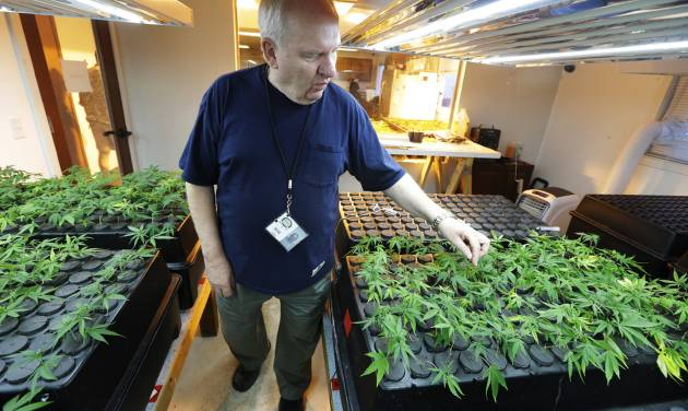 "In this July 1, 2014, photo, Bob Leeds, owner of Sea of Green Farms, a recreational pot grower and processor in Seattle, inspects small ""clone"" plants growing under lights in Seattle. The clones will be grown into full-size plants that produce the sticky ""flower"" required to make potent recreational marijuana. (AP Photo/Ted S. Warren)"