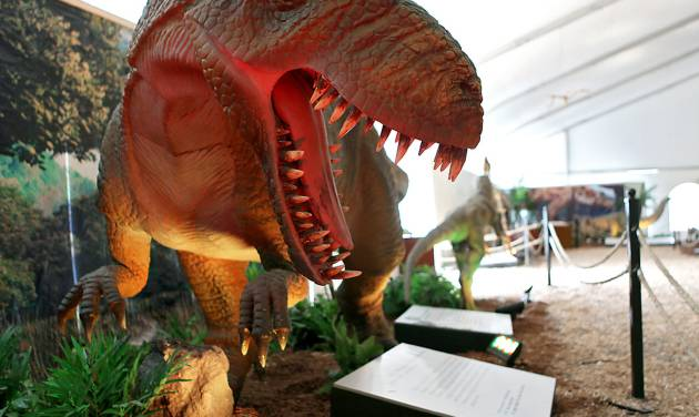 A yangchuanosaurus model is one of the dinosaurs on display at a new exhibit at Oklahoma City Zoo.