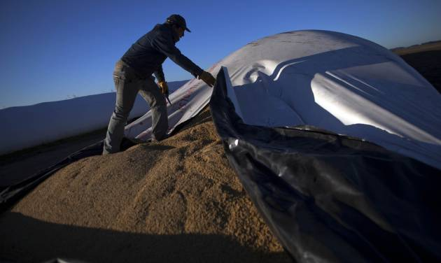 In this July 14, 2012 photo, a worker opens a portable silo bag to load into a truck to be transported for sale at a farm near Pergamino, Argentina. China is the leading buyer of Argentine soybeans, with most of the country's fertile land nowadays covered with the crop, its principal export. As Chinese ate more pork, fried chicken and hamburgers, increasing the demand for soybeans to make cooking oil and feed for pigs and cows, cattle ranchers in Latin America turned grazing land into fields of soy, a crop few in their region consume. (AP Photo/Natacha Pisarenko)
