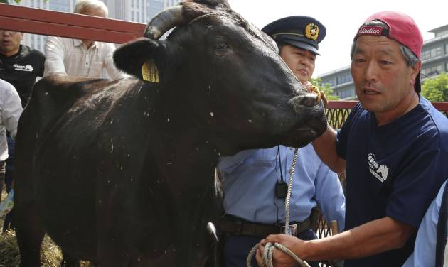 Japanese farmer Masami Yoshizawa, right, shows a black bull with speckles to the media as police officers block him from leading the bull off a truck he drove from Fukushima, northeastern Japan, in front of Agriculture Ministry in Tokyo Friday, June 20, 2014. Yoshizawa and fellow farmer Naoto Matsumura whose livelihoods were wrecked by the March 2011 nuclear disaster at the Fukushima Dai-Ichi nuclear plant have staged a protest briefly at the ministry to appeal for help with the livestock, some of which have developed unexplained white spots on their hides. (AP Photo/Koji Sasahara)