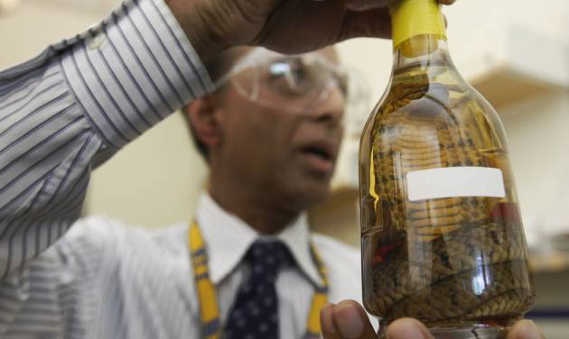 In this Thursday, April 19, 2012 photo, Dr. Abdul Mabud, director of the scientific services division of the U.S. Department of Treasury's Alcohol and Tobacco Tax and Trade Bureau, holds up a bottle of snake liquor from east Asia at a laboratory, in Beltsville, Md. The Alcohol and Tobacco Tax and Trade Bureau, which collects taxes on booze and smokes and tells the companies that produce them how to do business, is one example of the specialized government offices threatened by Washington's current zeal for cost-cutting. (AP Photo/Charles Dharapak)