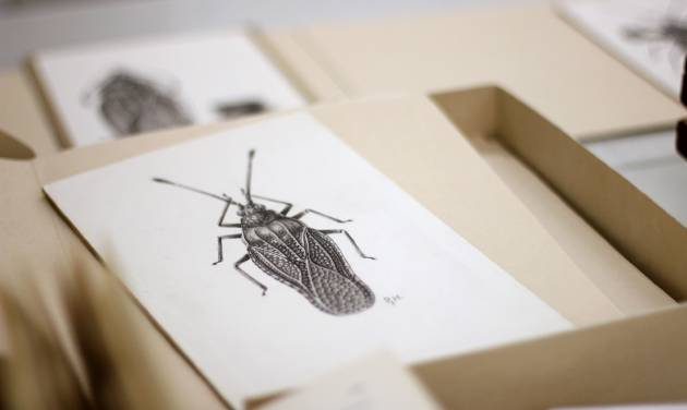 This photo taken June 5, 2014 shows diagrams in a room where the Drake bug collection is held at the Smithsonian Natural History Museum in Washington. When Dr. Carl J. Drake died in 1965 he left the Smithsonian's National Museum of Natural History $250,000 and his collection of thousands of bugs. Drake, an entomologist, spent his life studying insects, and he gave the Smithsonian a mission for his money: buy more bugs. After nearly half a century, however, the Smithsonian is having a hard time following the directives of Drake's will. (AP Photo/Connor Radnovich)