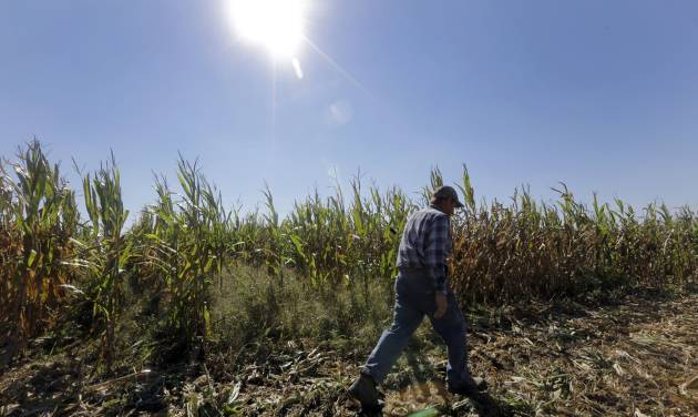 FILE  - In this Oct. 16, 2013 file photo, Larry Hasheider walks along one of his corn fields on his farm in Okawville, Ill. Cuts in food stamps, continued subsidies to farmers and victories for animal rights advocates. The massive farm bill heading toward final passage this week has broad implications for just about every American from the foods we eat to what we pay for them. Five things you should know about the legislation. (AP Photo/Jeff Roberson, File)