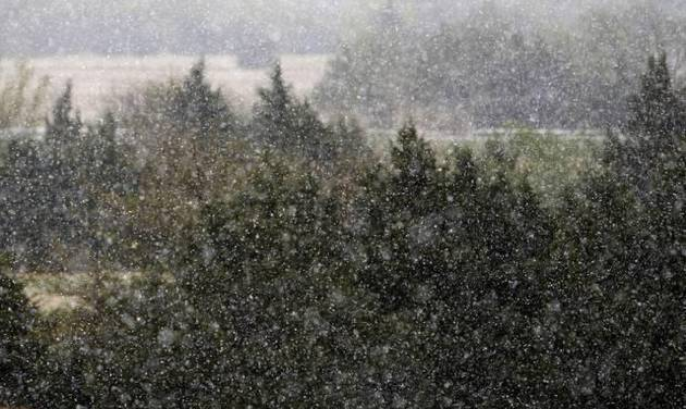 Snow falls on cedar trees in north Oklahoma City, OK, Monday, April 14, 2014, Photo by Paul Hellstern, The Oklahoman