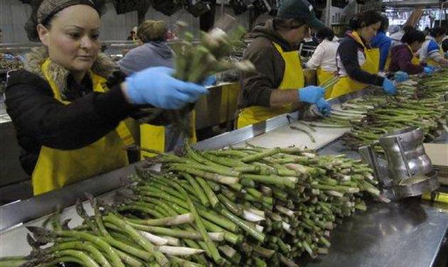 In this April 18, 2012 photo, Maria Partida, left, sorts fresh asparagus at a Gourmet Trading Co. packing plant in Pasco, Wash.  U.S. asparagus growers are replanting fields following a decades-long downturn. (AP Photo/Shannon Dininny)