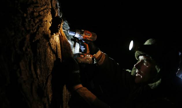 In this March 9, 2014 photo, Turtle Lane Maple farmer Paul Boulanger taps a maple tree by headlamp Sunday evening in North Andover, Mass. Maple syrup season is finally under way in Massachusetts after getting off to a slow start because of unusually cold weather. (AP Photo/Elise Amendola)