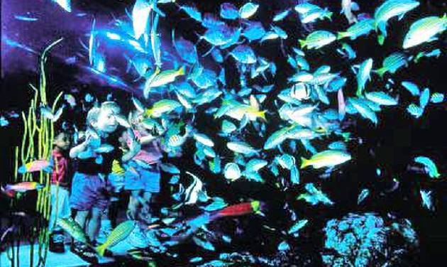 Visitors to Denver can find a lot for kids to see at the Downtown Aquarium. Among the activities is snorkling in the aquarium's largest fish tanks.
