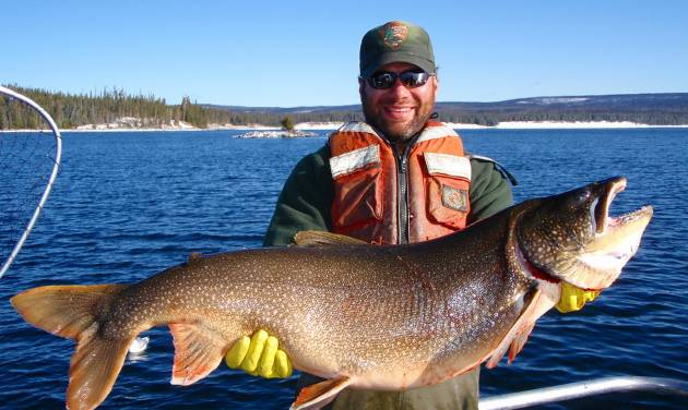 CORRECTS YEAR IMAGE WAS TAKEN TO 2013, NOT 2003 - In this photo taken in 2013 and released by the National Park Service. Brian Ertel, a fisheries biologist at Yellowstone National Park, holds a netted lake trout caught from Yellowstone Lake in Wyoming.  Scientists say they voracious species of trout that entered Yellowstone Lake and decimated its native trout population appears to be in decline following efforts to kill off the invading fish. (AP Photo/National Park Service)