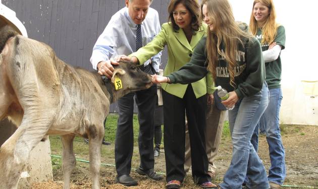 Vermont Gov. Peter Shumlin, left, and U.S. Labor Secretary Hilda Solis, second from left, view a calf at the dairy at Vermont Technical College in Randolph, Vt., Tuesday Oct. 2, 2012. Attending are students Rachel Arsenault, second from right, and Stephanie Nault, right. Solis was in Vermont to announce a $3.4 million agricultural training grant for Vermont Tech. (AP Photo/Wilson Ring)