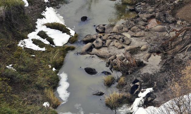 FILE - This Oct. 10, 2013 file aerial photo shows dead cattle in Sulphur Creek in western South Dakota during a flyover of areas hard hit by a snowstorm that killed thousands of animals. In a progress report Wednesday, July 9, 2014, the U.S. Department of Agriculture says farmers and ranchers who suffered heavy livestock and grazing losses due to extreme weather in the past three years have been quick to take advantage of newly available disaster relief funds. The agency said it has distributed more than $1 billion in relief funds, a little less than half the overall amount predicted in the recently passed farm bill, in just over three months. The agency estimates it will spend $2.5 billion overall on disaster relief cases from 2011 to 2014. (AP Photo/KOTA-TV, Pool, File)