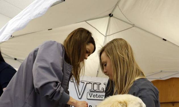 Jeff Ridgeway's Anatolian shepherd, Zeus, gets an identifying microchip implanted by veterinarian Darolyn McGinley, left, and Amanda Burton during a pet expo sponsored by Hands Helping Paws and Norman Animal Welfare. [PHOTO BY STEVE SISNEY, THE OKLAHOMAN]