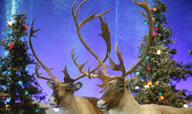 Stuffed reindeer are in the Santa's Wonderland at Bass Pro Shops in Oklahoma City. Photo by SARAH PHIPPS, THE OKLAHOMAN
