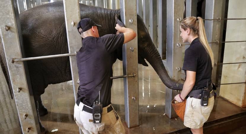 Oklahoma City Zoo staff hopes new testing procedures will help prevent elephant deaths