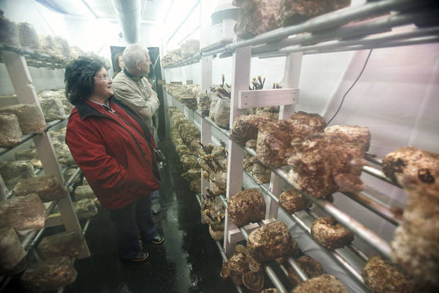 Bethany residents Kathy and John Larsen look at the mushrooms growing on shelves inside a semitrailer in Edmond. The mushroom farm is owned by Heather Popowsky of Oklahoma Mushroom. <strong>PAUL HELLSTERN - The Oklahoman</strong>