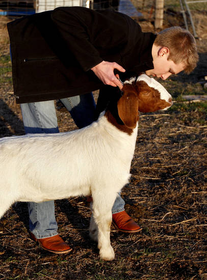 Carson Lough works with a goat in Hennessey on Thursday. Photo by Sarah Phipps, The Oklahoman <strong>SARAH PHIPPS</strong>