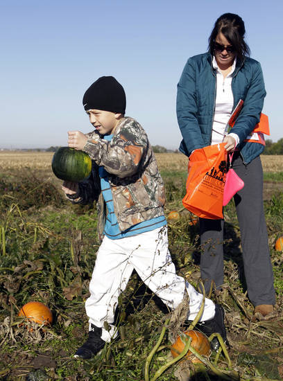 Austin Johnson, 8, of Greenfield, Ind., and his mother, Michelle, pick pumpkins Monday in a patch at the Tuttle Orchards, in Greenfield, Ind. The orchard had a good pumpkin crop but canceled public apple-picking this year after a series of subfreezing nights zapped apple blossoms lured into early bloom by unusually warm March weather. AP Photo
