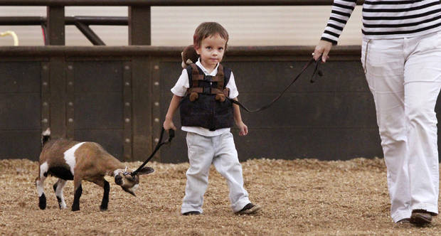 "Paul Goodchild, 4, of Norman, leads his reluctant Nigerian Dwarf goat, Emmy,  after showing her in the three to six month-old  class during goat judging at the Oklahoma State Fair on Wednesday, Sep. 19, 2012. This is Goodchild's first time to show an animal at the state fair. Emmy won a second place ribbon; Paul was awarded a first place ribbon for showmanship. "" Leading"" Paul is his mother, Karen Goodchild.  Photo by Jim Beckel, The Oklahoman."