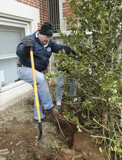 "Volunteer Ernie Raper shovels dirt around the roots of a tree as ""Friends of Edgemere Elementary"" plant 40 trees on the grounds of Edgemere Elementary School in Oklahoma City, OK, Saturday, Feb. 11, 2012. By Paul Hellstern, The Oklahoman"