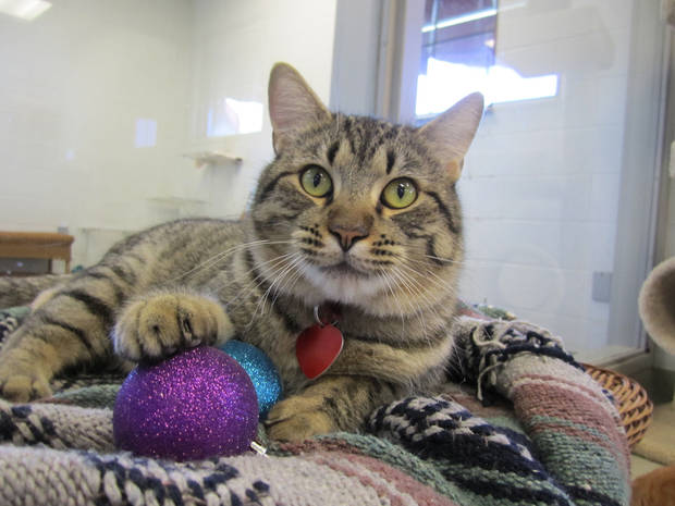Jones is a friendly cat who would like to help you decorate your Christmas tree. He enjoys opening presents, too. Jones is a 2-year-old short-haired tabby. His Oklahoma City Animal Shelter number is 128236, and his adoption fee is $25. This includes spay or neuter, shots and health check. The shelter is at 2811 SE 29. For more information, go online to www.okc.petfinder.com or www.okc.gov. PHOTO PROVIDED BY OKLAHOMA CITY ANIMAL SHELTER