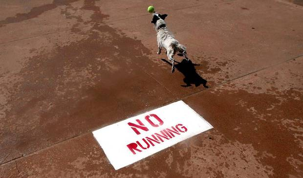 A dog runs past a sign during the Pooch Pool Party at the Westwood Water Park in Norman, Okla., unday, Sept. 2, 2012. Photo by Sarah Phipps, The Oklahoman