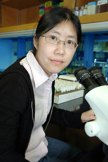 Hui-Ying Lim, Ph.D., is investigating the essential role of free radical signaling in proper heart development and function using fruit flies.  <strong></strong>