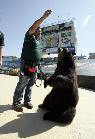 "Trainer Dave Argueta brings out mascot ""Lady"" the black bear after a Baylor score in the first half during the college football game between Oklahoma (OU) and Baylor University at Floyd Casey Stadium in Waco, Texas, Saturday, October 4, 2008.   BY STEVE SISNEY, THE OKLAHOMAN"