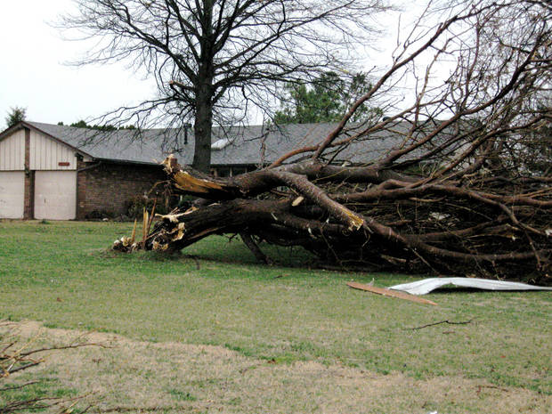 Storm damage on Big Cedar near Mitch Park. Photo by John A. Williams