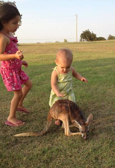 An undated photo provided by the Menhusen family shows kangaroo Lucy Sparkles, center, with Layla Menhusen, left, and Indya Menhusen, right. The Menhusen family is searchng for their pet, Lucy Sparkles, which the family last saw on Thanksgiving, when Sheila Menhusen says she thinks the red kangaroo was freaked out by people gathered at their home near Shawnee, Okla.,  for the holiday. The family is offering a $500 reward. (AP Photo/The Menhusen family) Family provided us with photos. I emailed the mom, Shayla Menhusen, the formal email asking for permission. Haven't heard back yet. Jeannie Nuss Reporter The Associated Press Little Rock, Ark. ORG XMIT: NY118