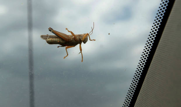 A grasshopper sits on the windshield of Fred Reuter's truck in El Reno, Okla., Thursday, Aug. 16, 2012. Photo by Sarah Phipps, The Oklahoman