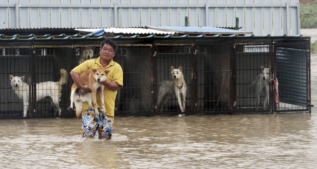 A man carries his dog to safer place from the cages in Jindo, south of Seoul, South Korea, Thursday, Aug. 30, 2012. Strong winds and hard rain pounded parts of South Korea on Thursday, as the second typhoon this week barreled down on the Korean Peninsula only days after 20 people died or went missing in the South in the first storm. (AP Photo/Park Chul-hung, Yonhap) KOREA OUT