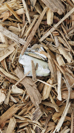 Above and below: Pieces of shredded metal have been found in the wood chips at Washington Park.