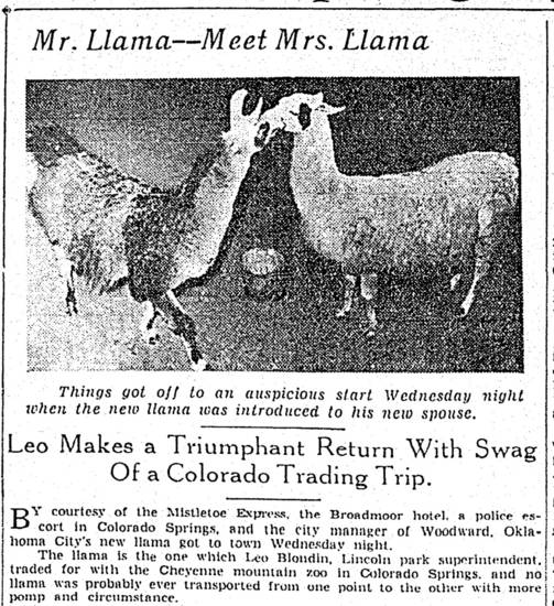 Mamma Llama and her beau. - FROM THE OKLAHOMAN