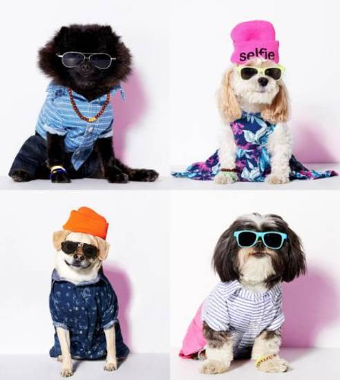 American Eagle Outfitters Previews American Beagle Outfitters, The Brand's First-Ever Clothing Line For Man's Best Friend.  (PRNewsFoto/American Eagle Outfitters, Inc.)